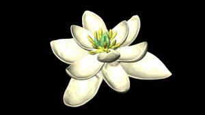 Así eran las flores hace más de 100 millones de años