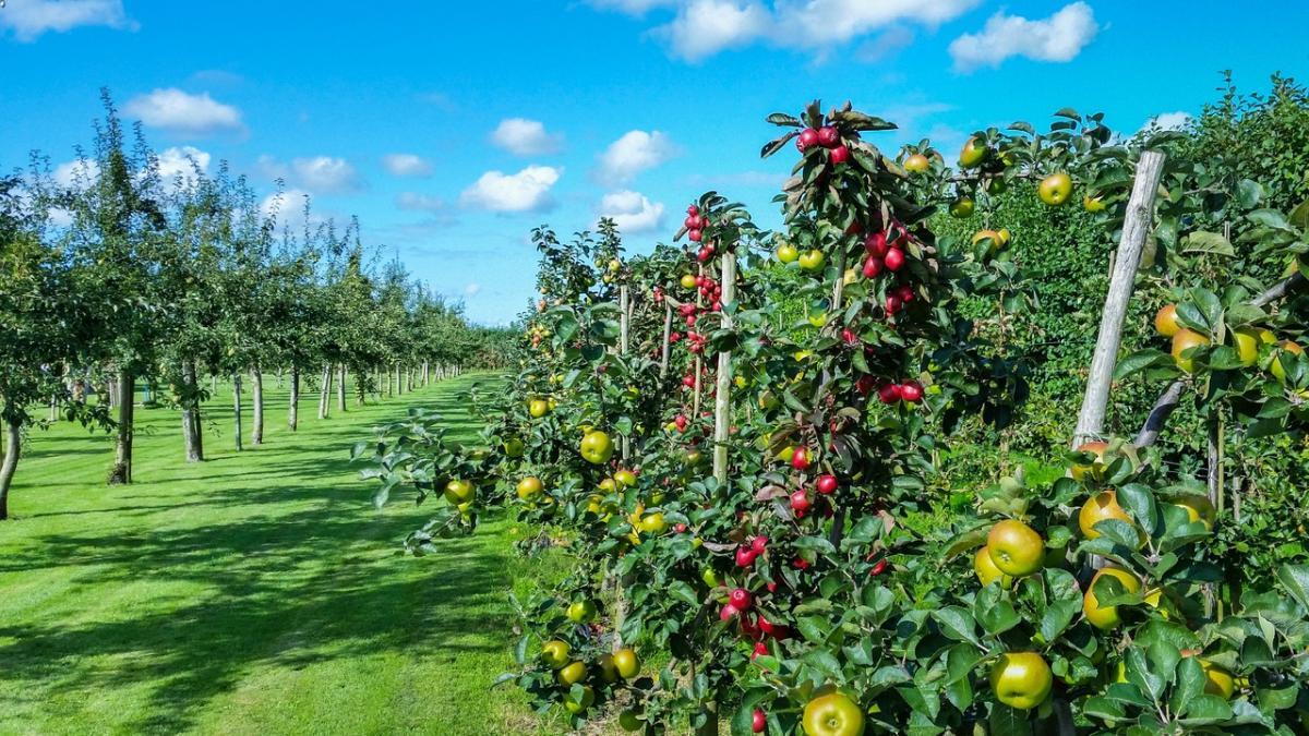 Un huerto te permite tener plantas comestibles