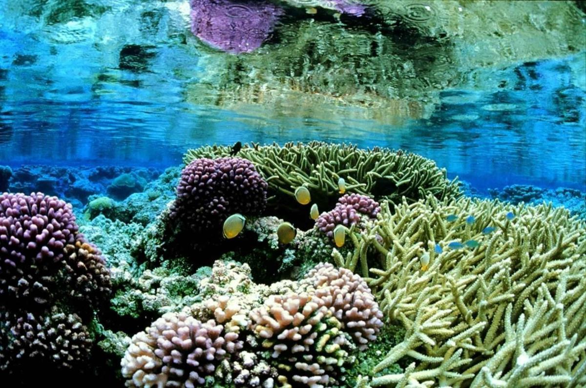 Las plantas marinas soportan bien la salinidad
