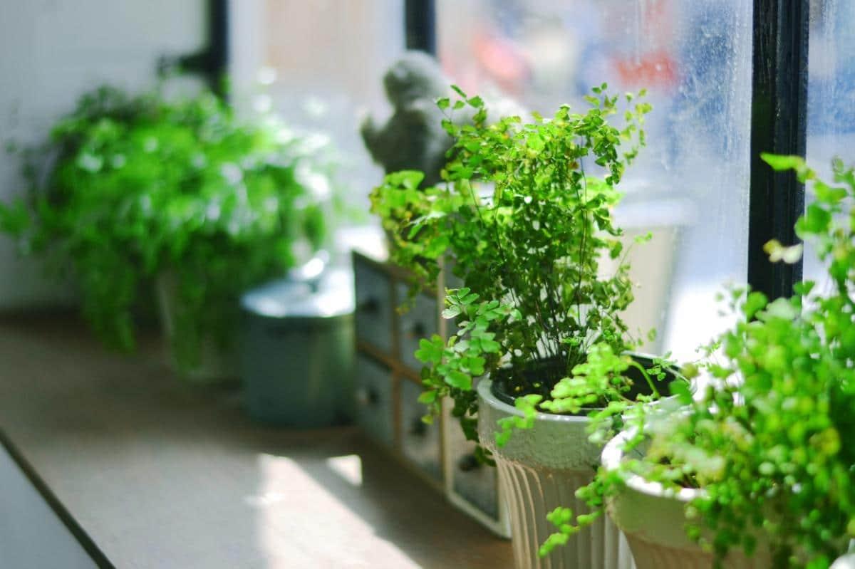 Puede que debas proteger tus plantas en invierno