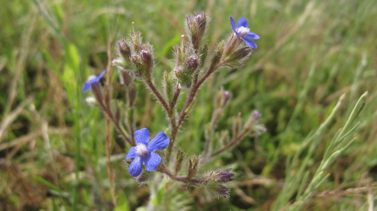 preciosa planta con flores azules tirando a lilas