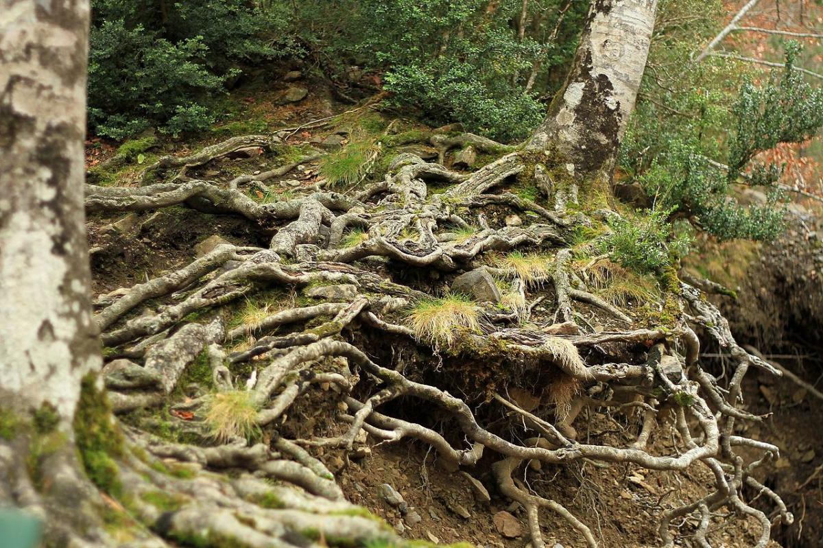 Las plantas tienen muchos tipos de raíces