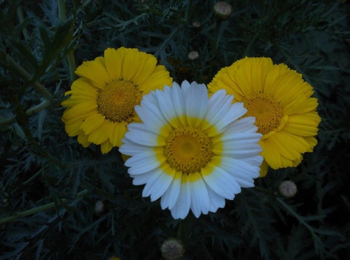 Crecimiento de flores coloridas