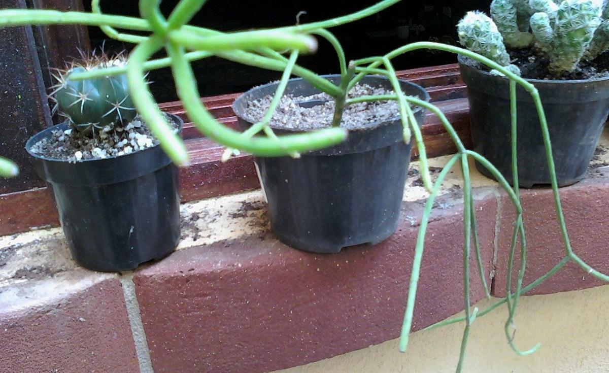 tres macetas pequenas con diferentes plantas