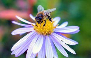Las abejas adoran las plantas que producen néctar