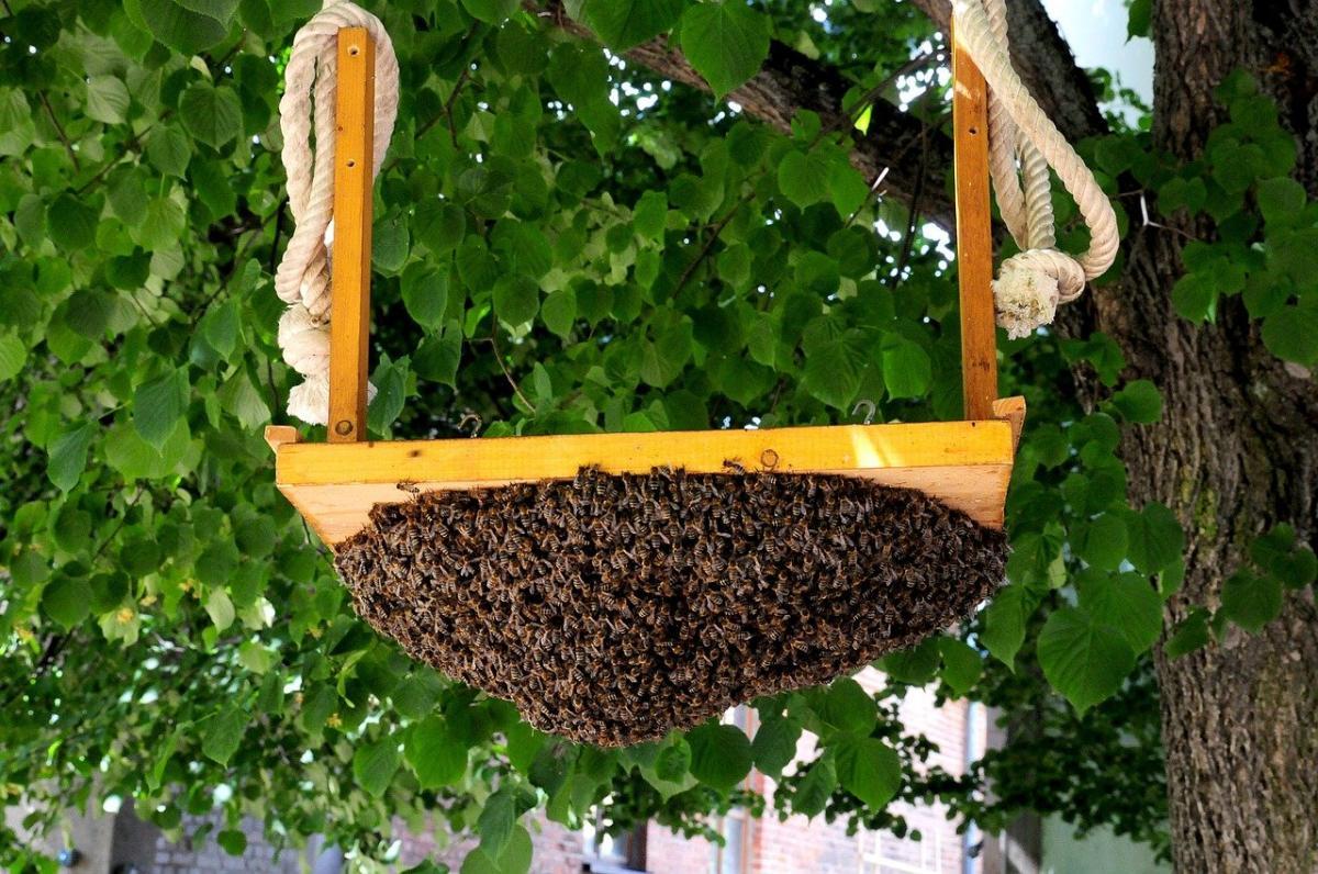 La miel de abeja tiene propiedades medicinales
