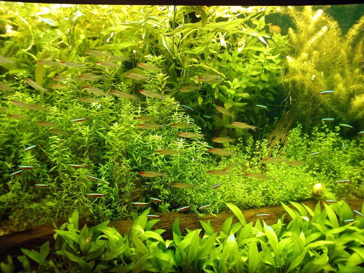Si tienes un acuario, llénalo de plantas