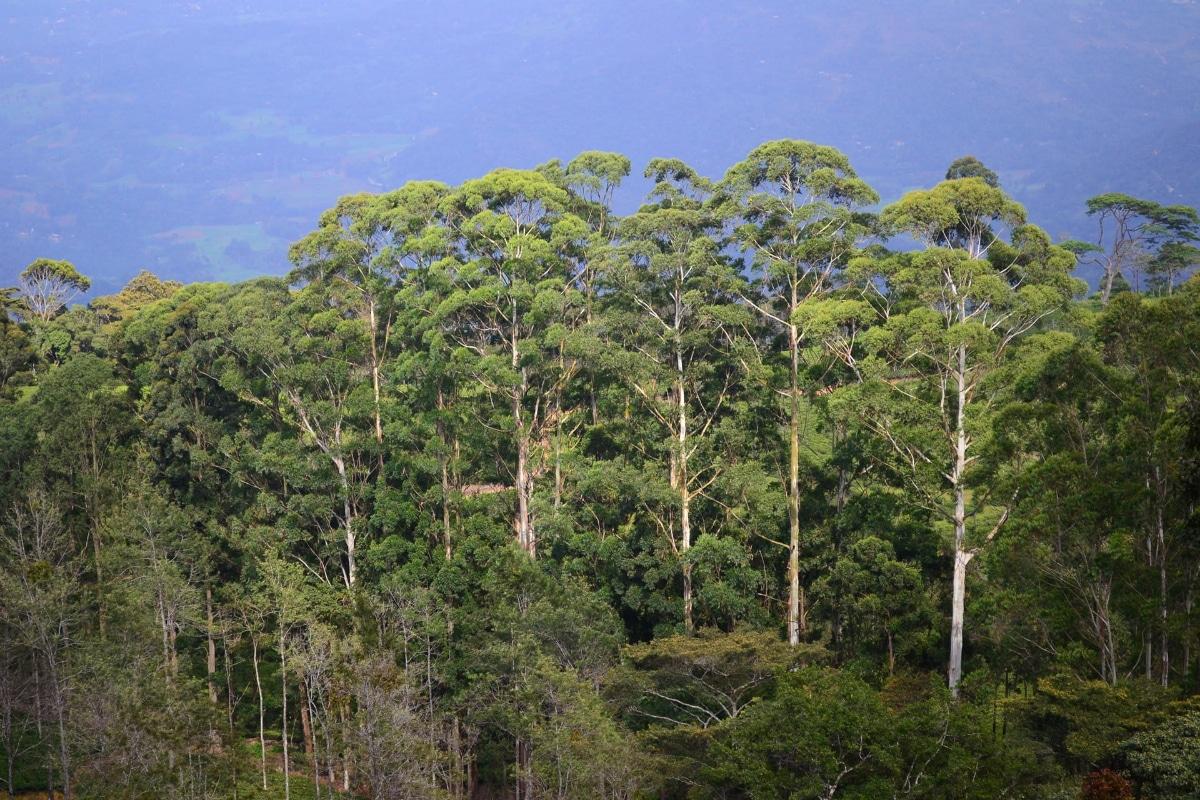 Las plantas asimilan el nitrógeno por las raíces y hojas