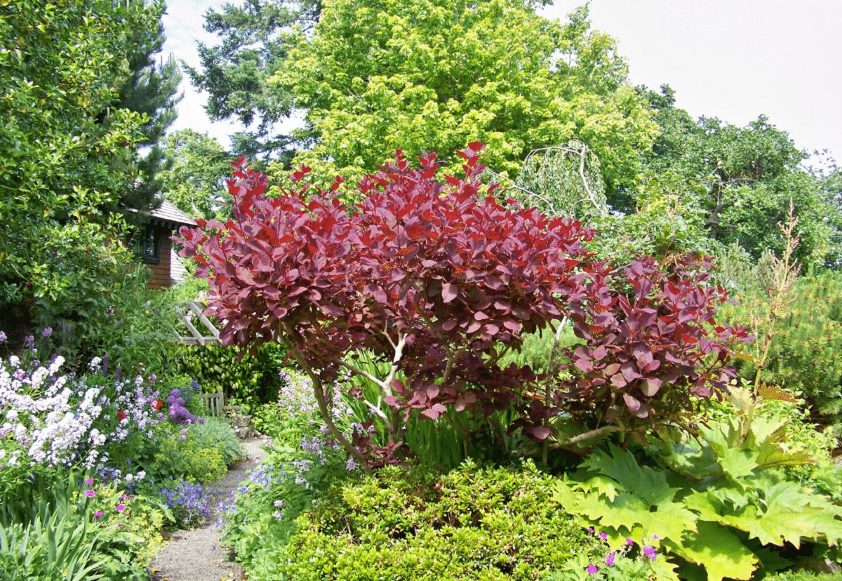 arbusto que sobresale de los demas gracias a sus hojas