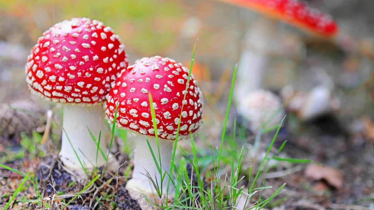 caracteristicas principales de los hongos