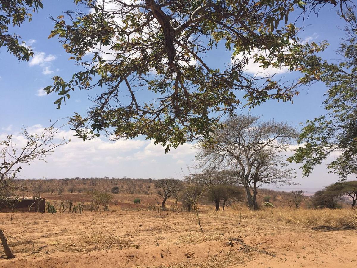Las plantas de clima seco soportan la sequía