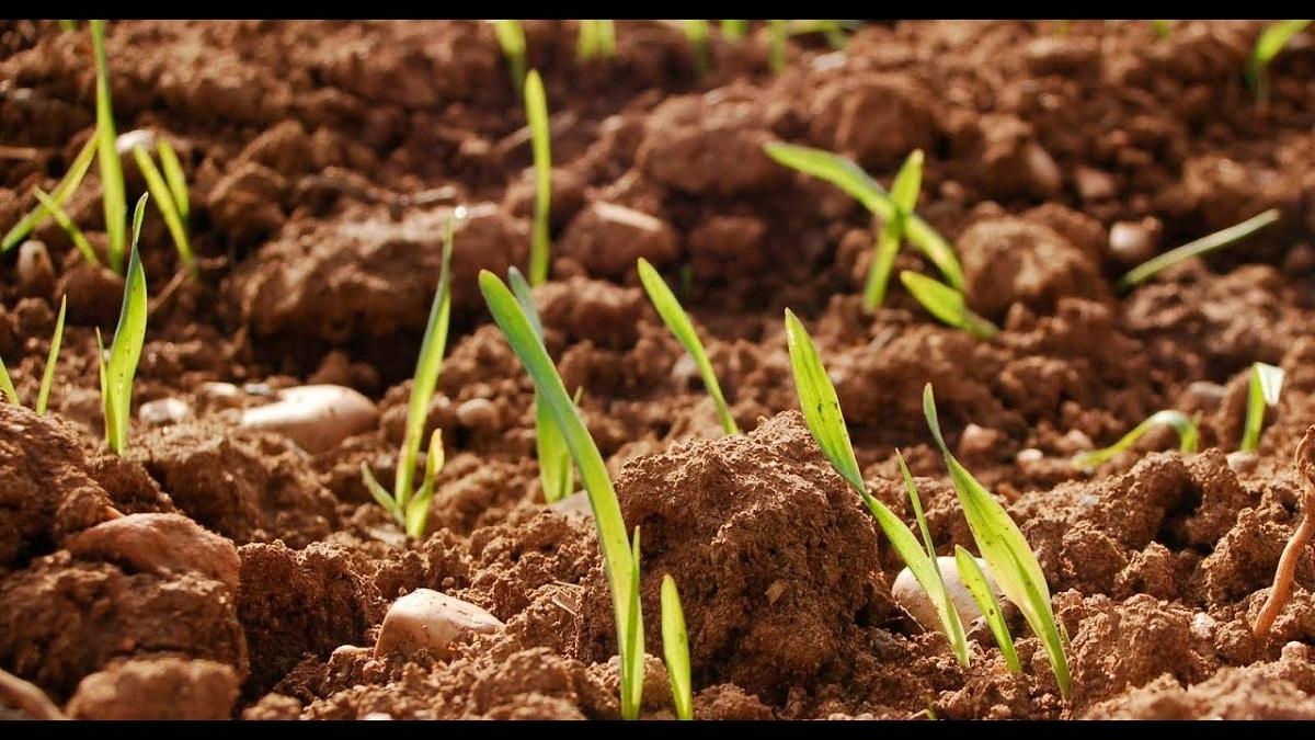 como recuperar un suelo erosionado