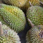 Los frutos del durián son comestibles