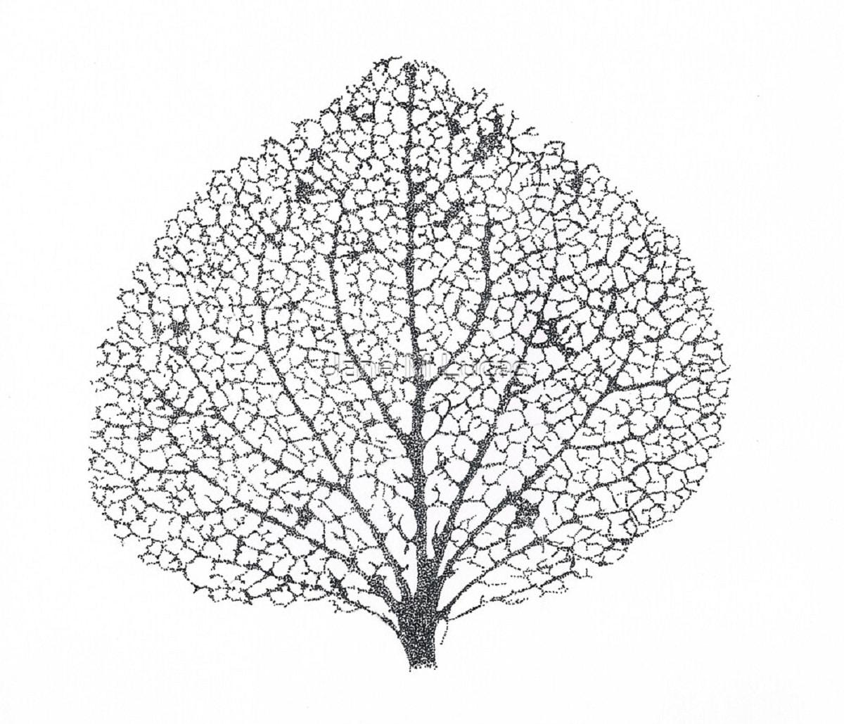 esqueleto de hojas