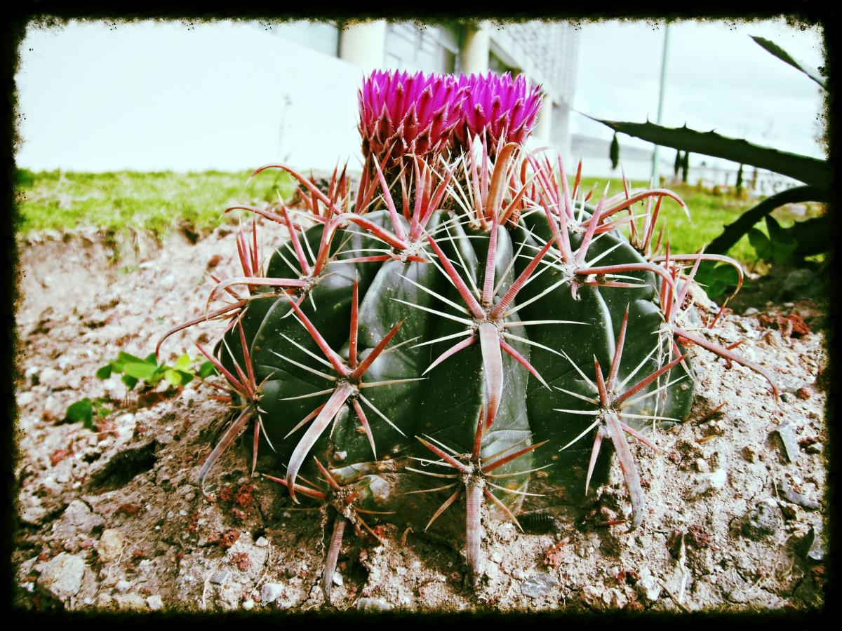 La mayoría de cactus tienen espinas