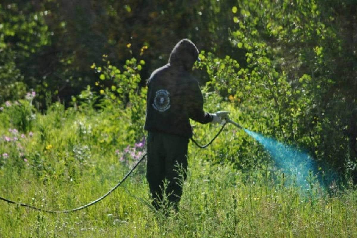 herbicida casero ecologico