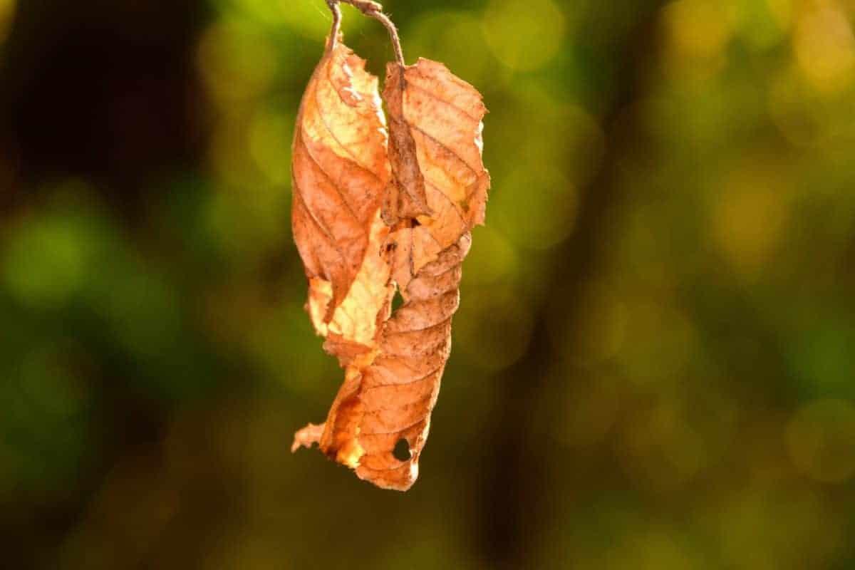 El estrés hídrico en plantas es común en zonas secas