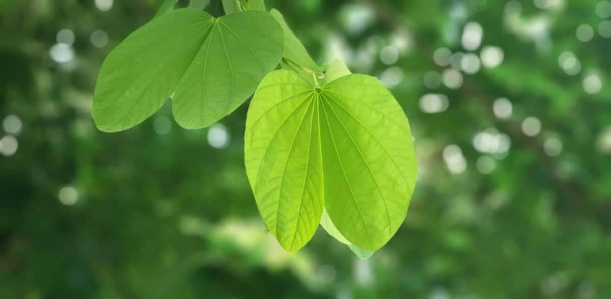 Las hojas tienen varias partes