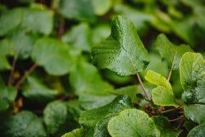 El nitrógeno es vital para el crecimiento de las plantas