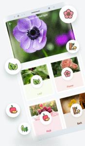 LeafSnap te servirá para saber el nombre de tu planta