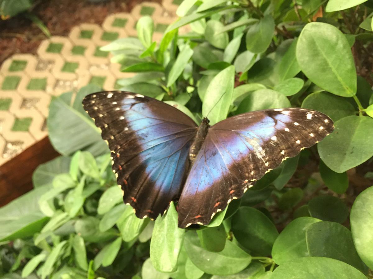 Hay un jardín de mariposas en el Miracle Garden