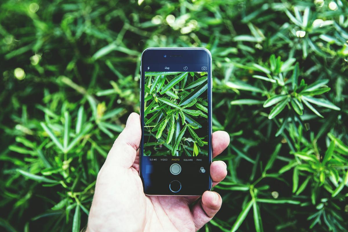 Identificar plantas te será fácil con estas apps