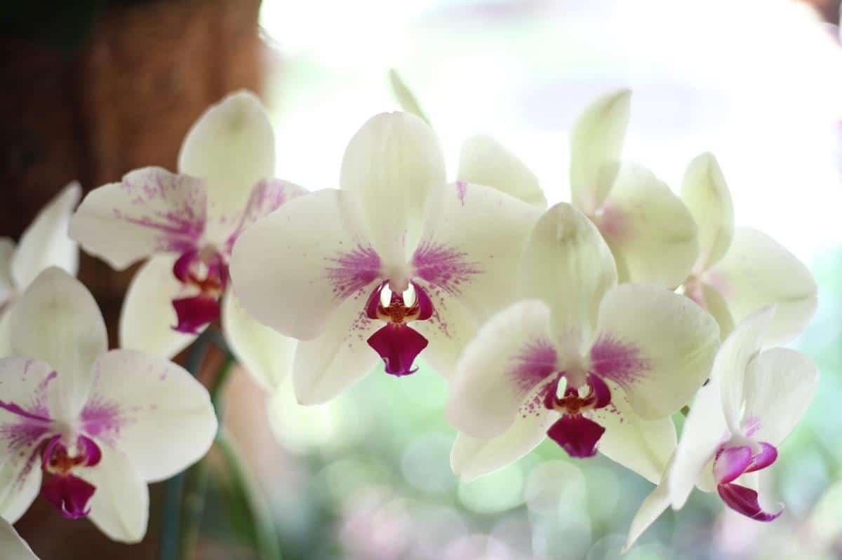 Las orquídeas necesitan luz pero no directa