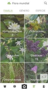 PlantNet te servirá para aprender más de tu planta