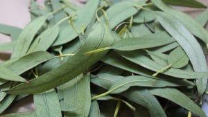 recoleccion de hojas