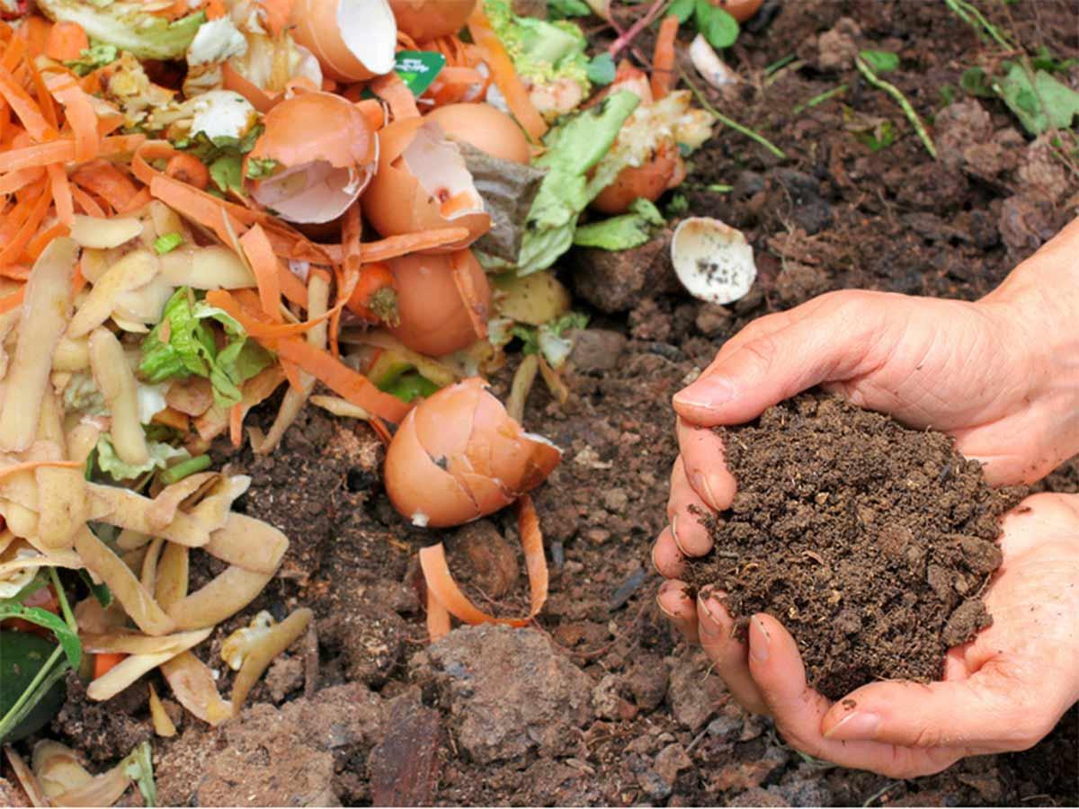 restos organicos