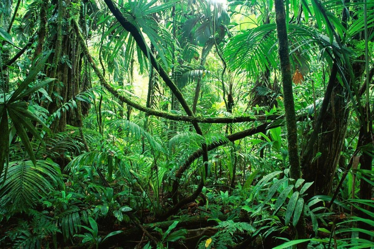 La selva tropical está llena de plantas