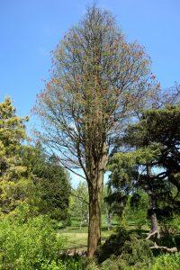 Vista del Taxodium ascendens