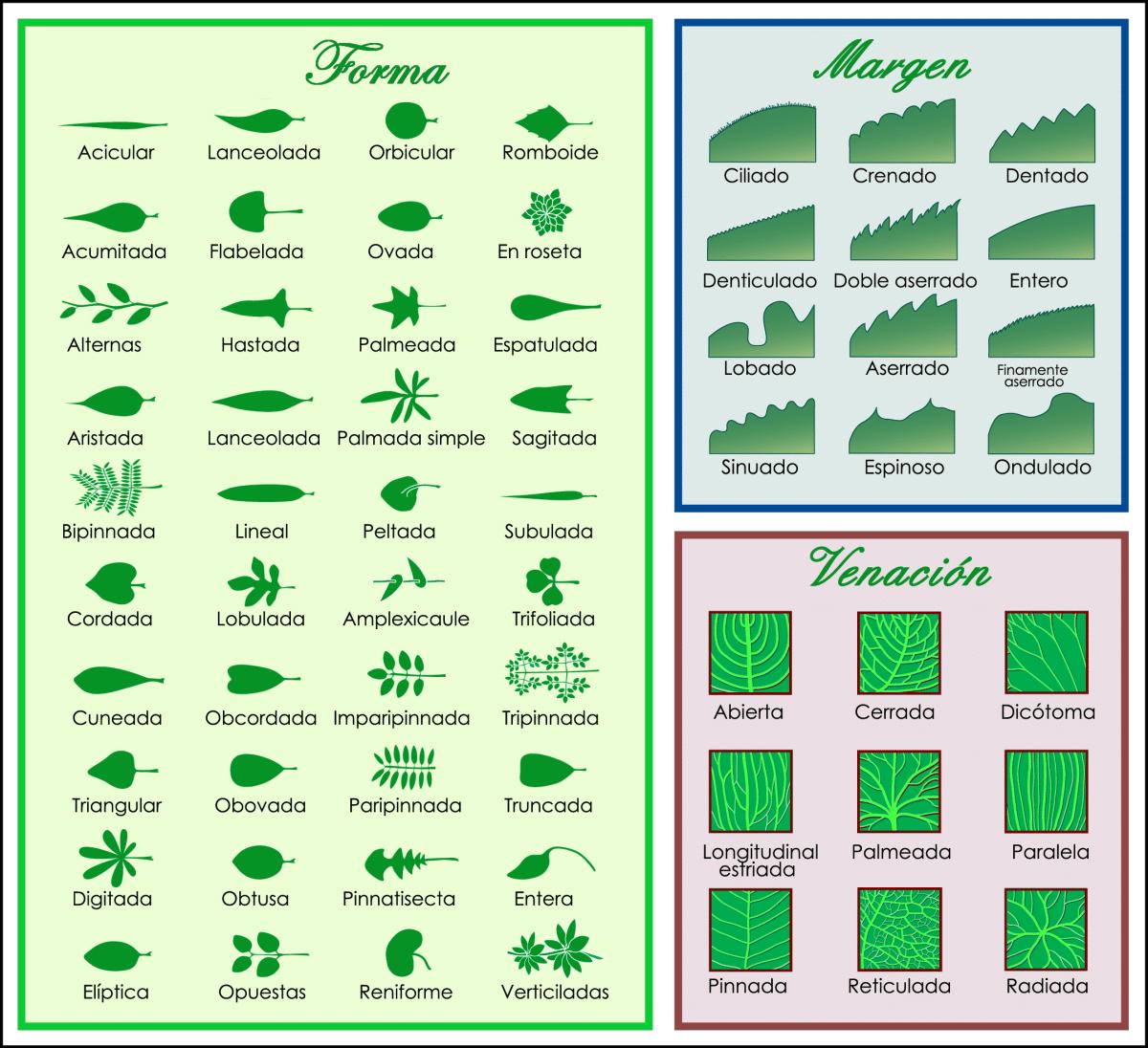 Hay muchos tipos de hojas