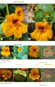 Vista de la app PlantNet