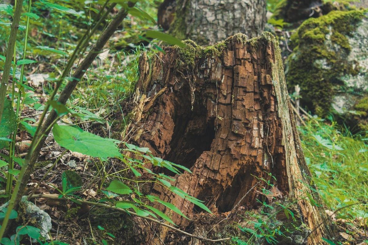 La edafología es la ciencia que estudia el suelo con su relación con las plantas
