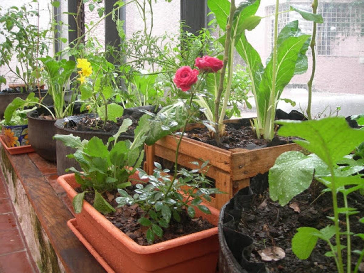 asociacion de plantas de huerto