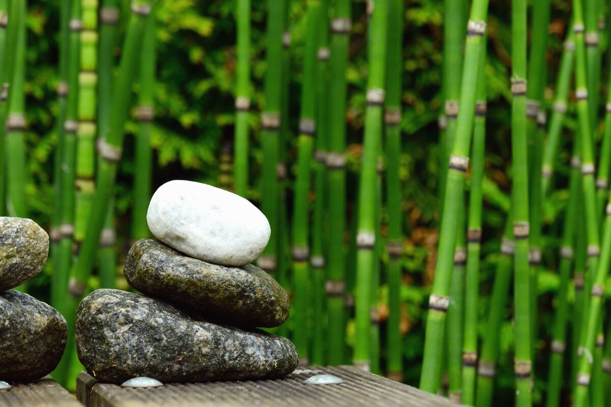 El bambú es una planta de muy rápido crecimiento