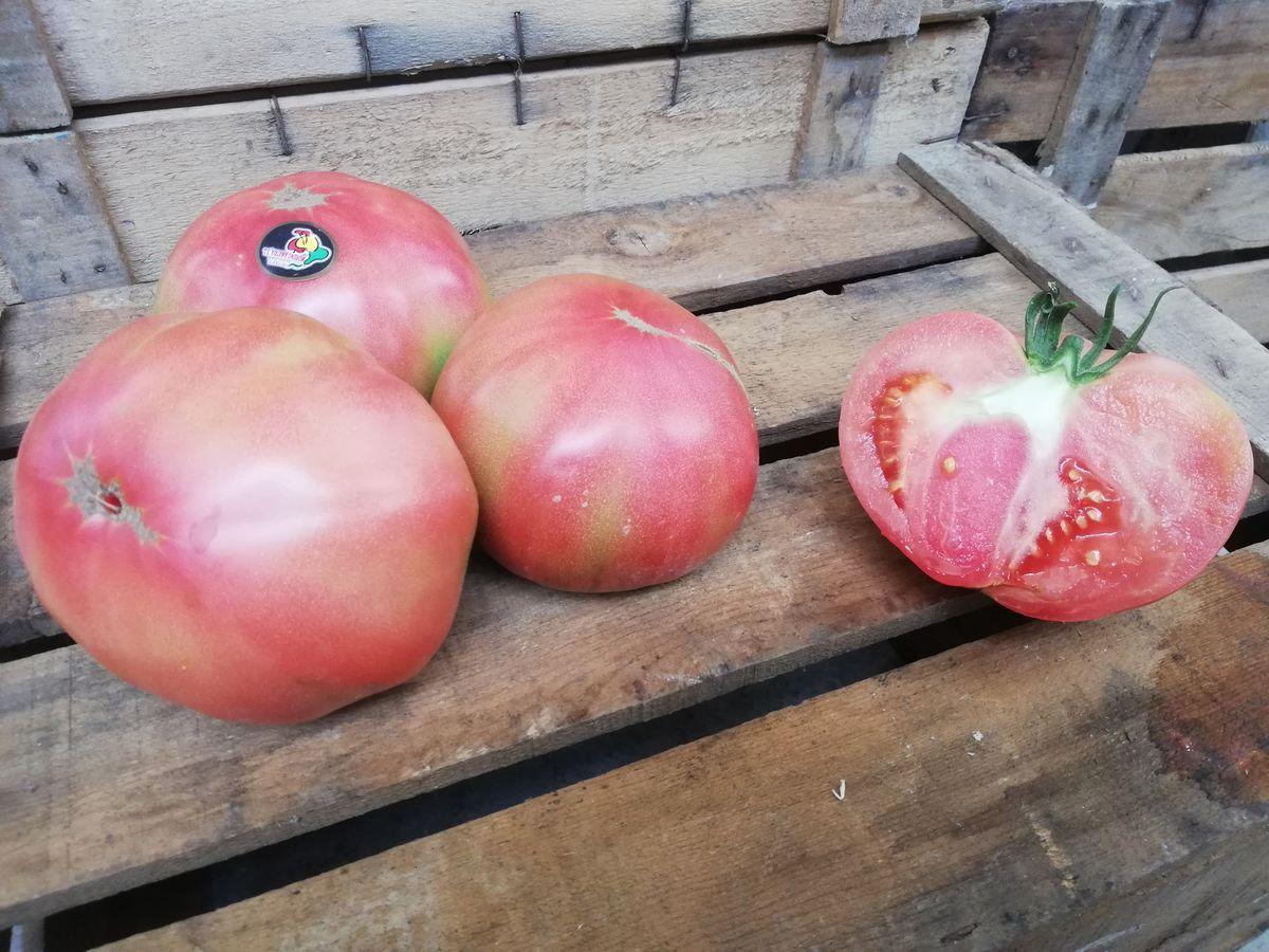 calidad del tomate rosa