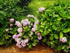 colores de las plantas ornamentales