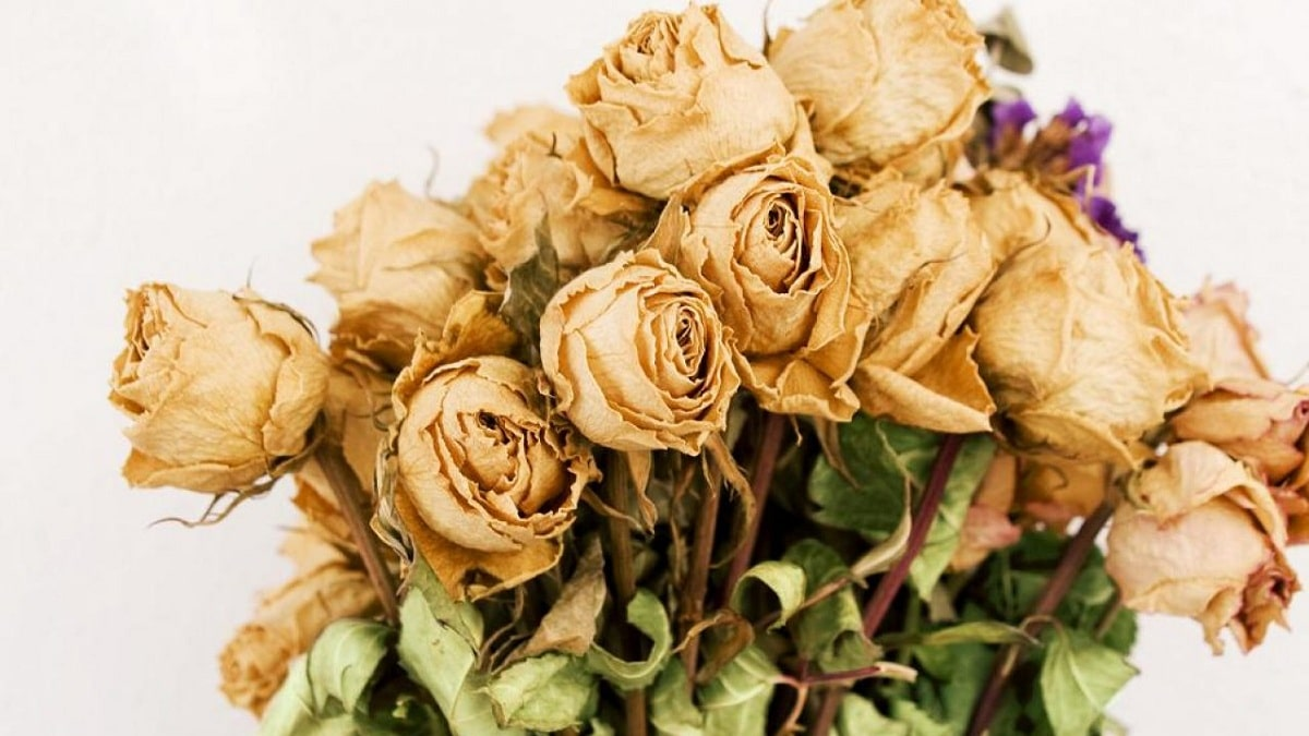como secar una rosa para siempre