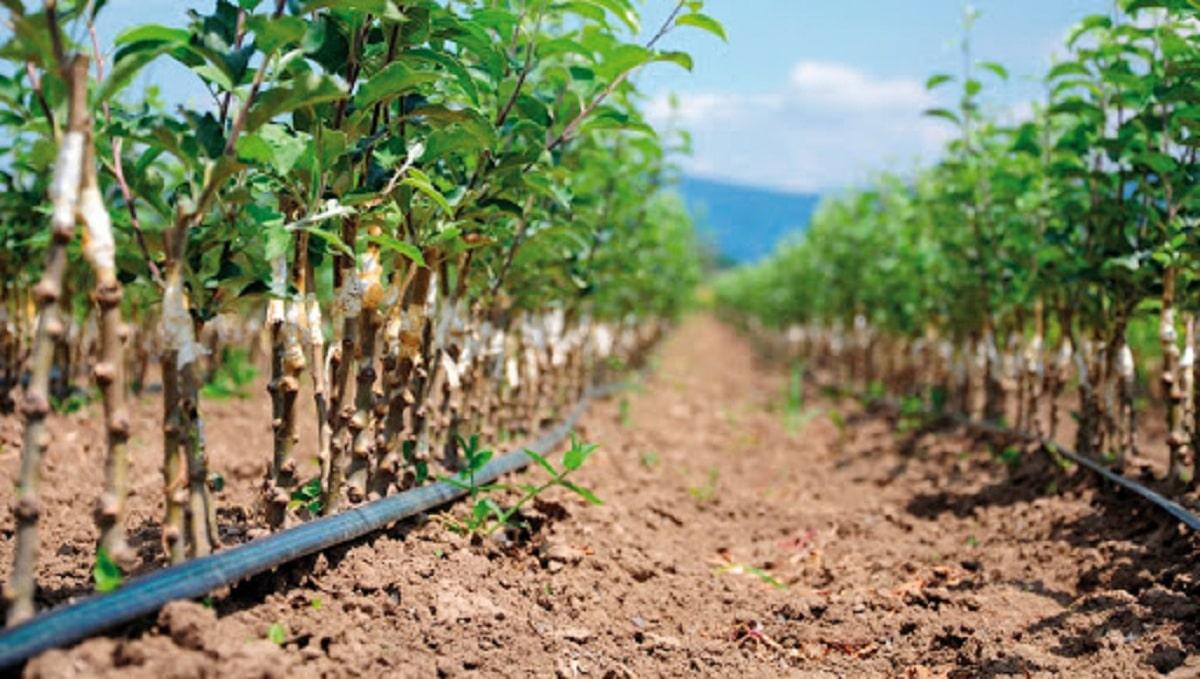 demanda de fertilizantes