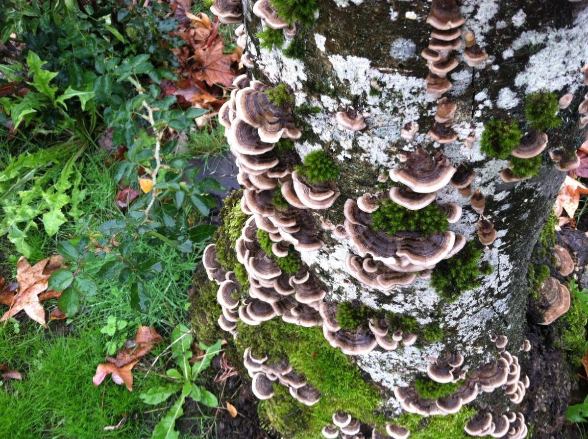 Los hongos producen micelio