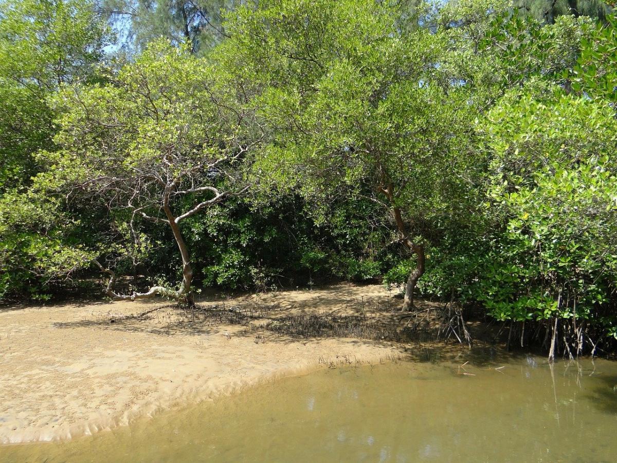 Los manglares son biomas