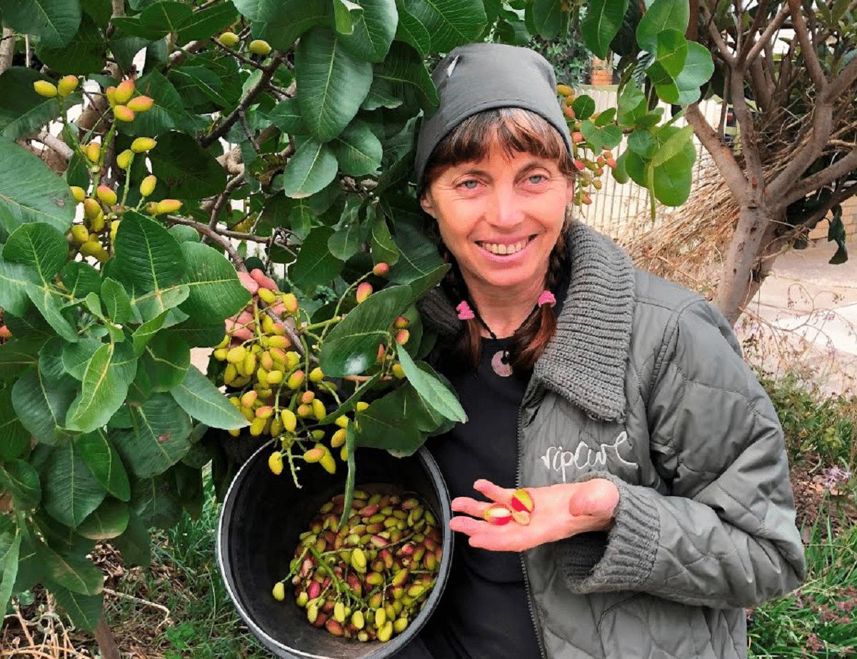 mujer recogiendo pistachos
