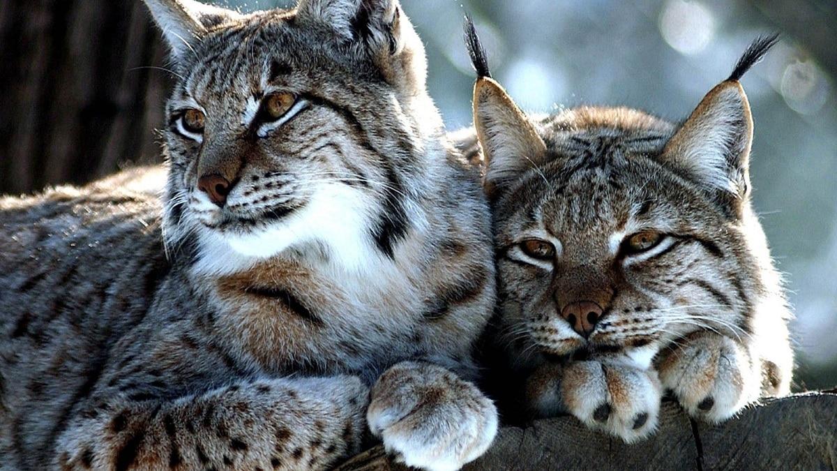 nicho ecologico animales