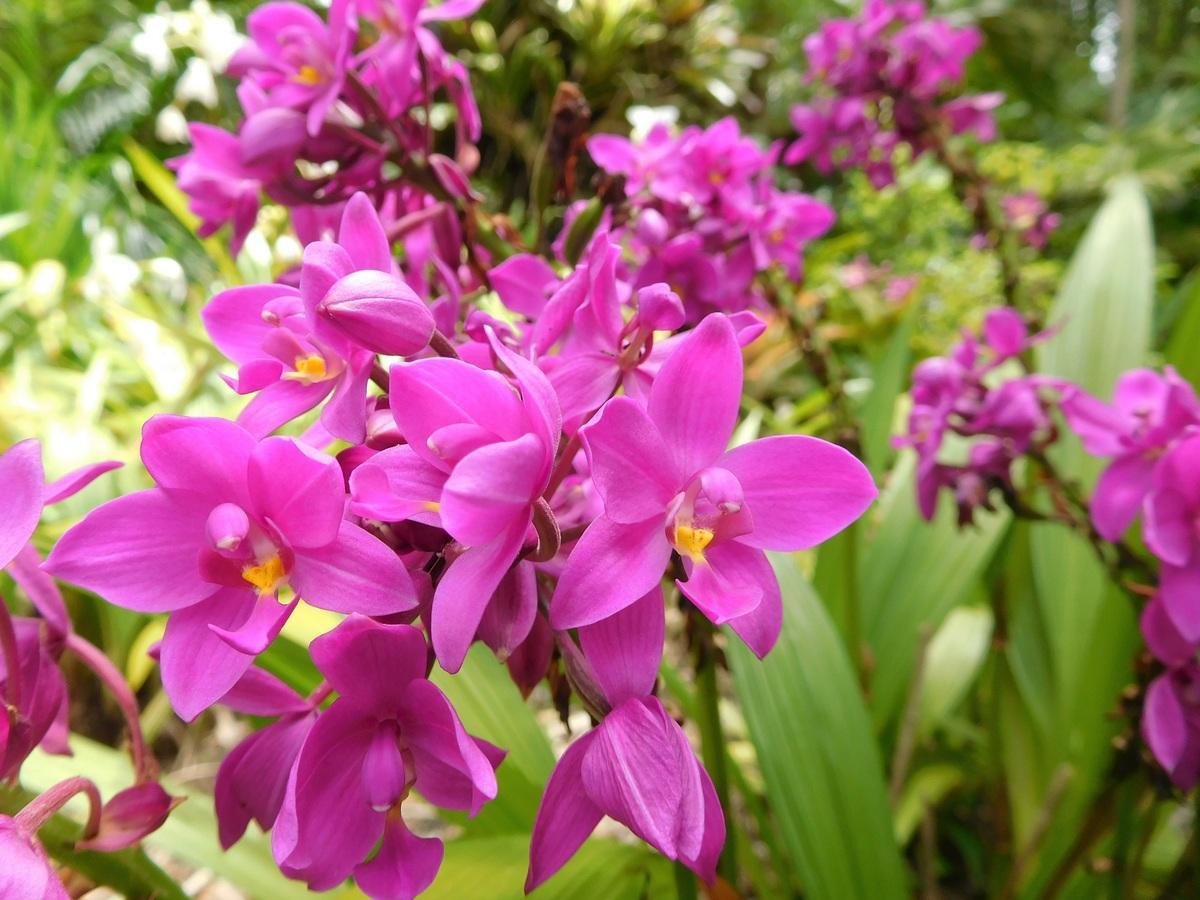 Las orquídeas pueden dejar de florecer en cualquier momento