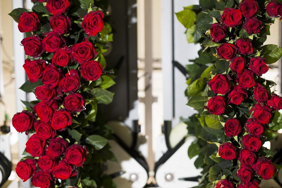 rosas para disecar