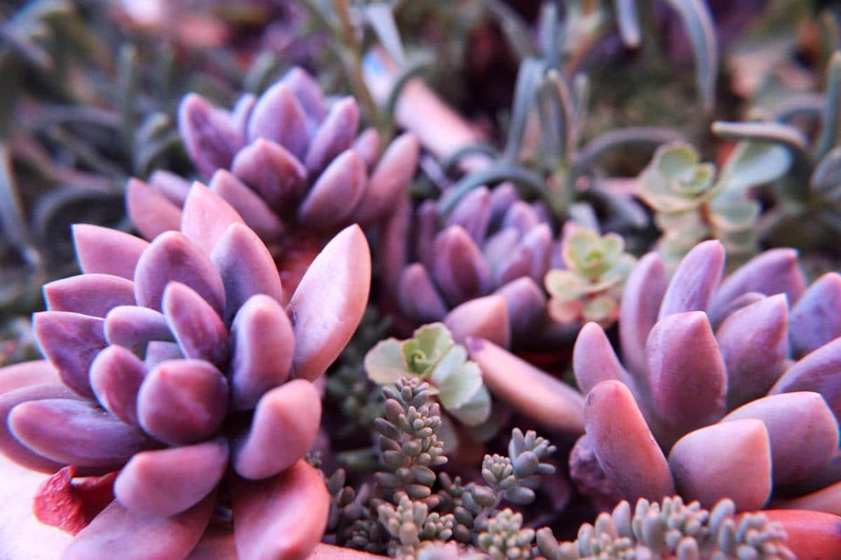 Hay muchas suculentas raras en el mundo fáciles de cultivar