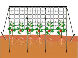 El cultivo en espaldera te permite ahorrar espacio