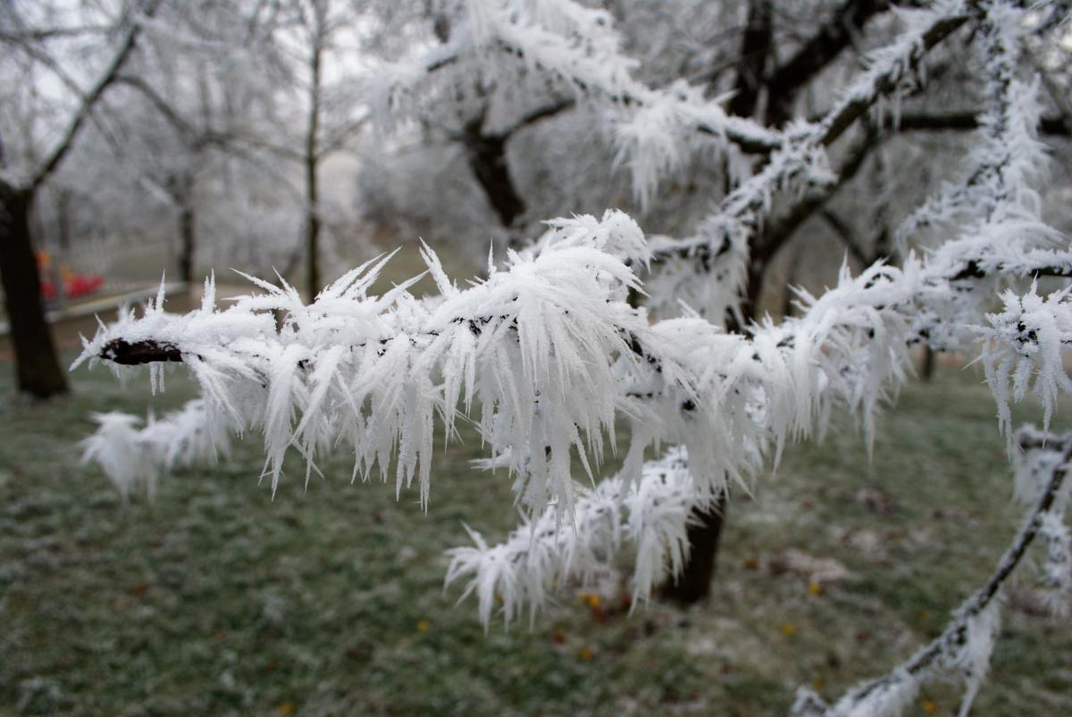 Hay muchas plantas que resisten la nieve